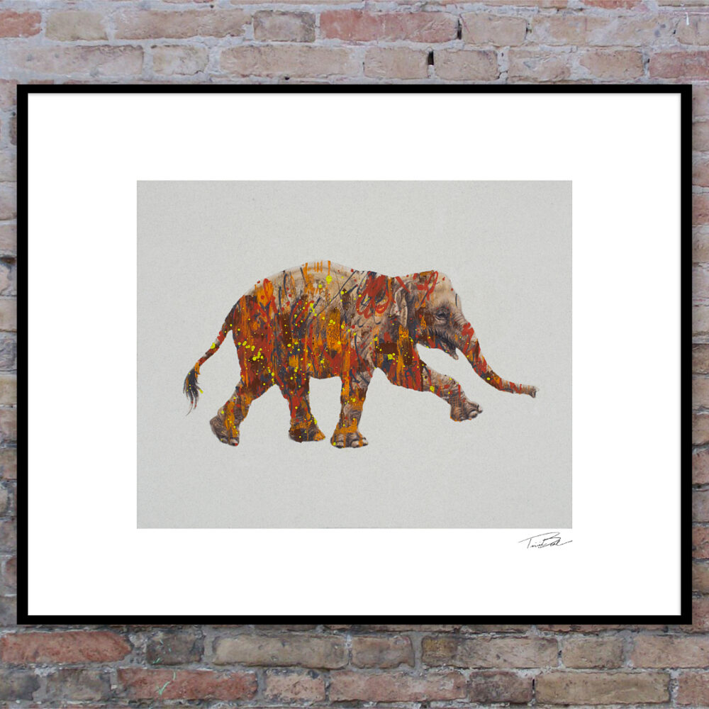 Asian elephant framed